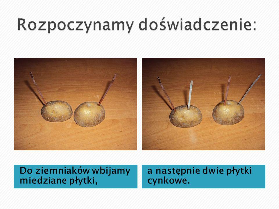 Do ziemniaków wbijamy miedziane płytki, a następnie dwie płytki cynkowe.