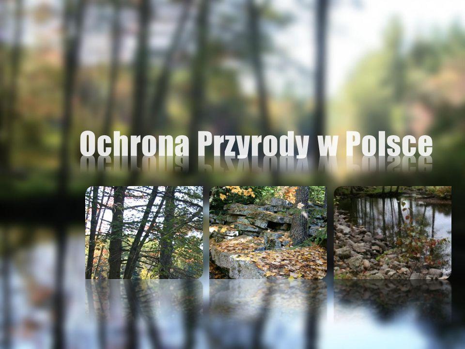 Pierwsze ograniczenia prawne, dziś interpretowane jako przepisy chroniące przyrodę, pojawiły się już na początku istnienia państwa polskiego.