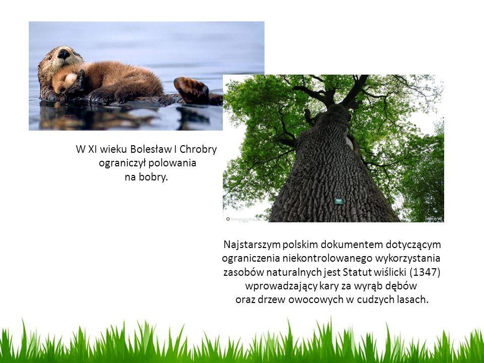 W XI wieku Bolesław I Chrobry ograniczył polowania na bobry. Najstarszym polskim dokumentem dotyczącym ograniczenia niekontrolowanego wykorzystania za