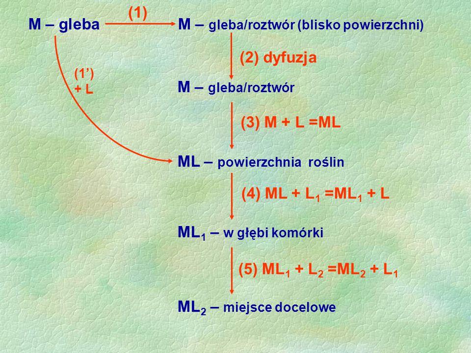 M – gleba M – gleba/roztwór (blisko powierzchni) (2) dyfuzja M – gleba/roztwór ML – powierzchnia roślin (3) M + L =ML ML 1 – w głębi komórki (4) ML +