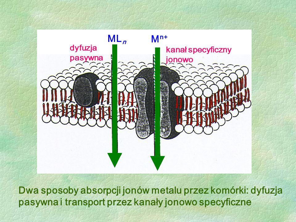 Dwa sposoby absorpcji jonów metalu przez komórki: dyfuzja pasywna i transport przez kanały jonowo specyficzne ML n M n+ dyfuzja pasywna kanał specyfic