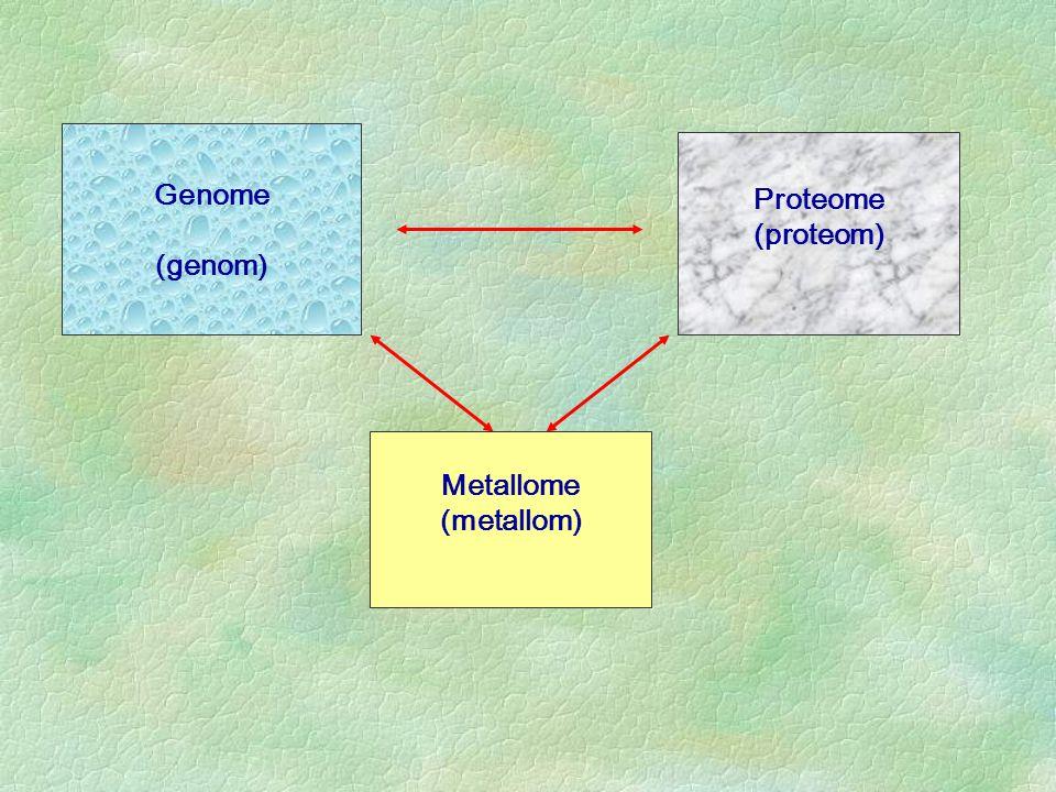 Genome (genom) Proteome (proteom) Metallome (metallom)