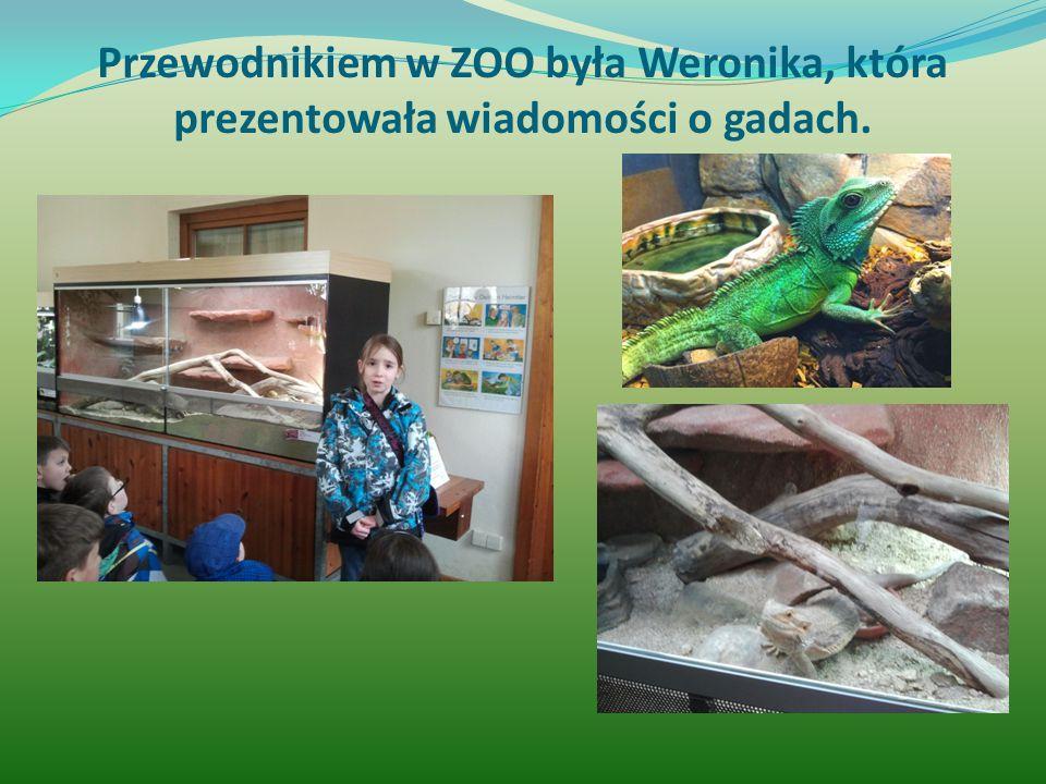 Przewodnikiem w ZOO była Weronika, która prezentowała wiadomości o gadach.