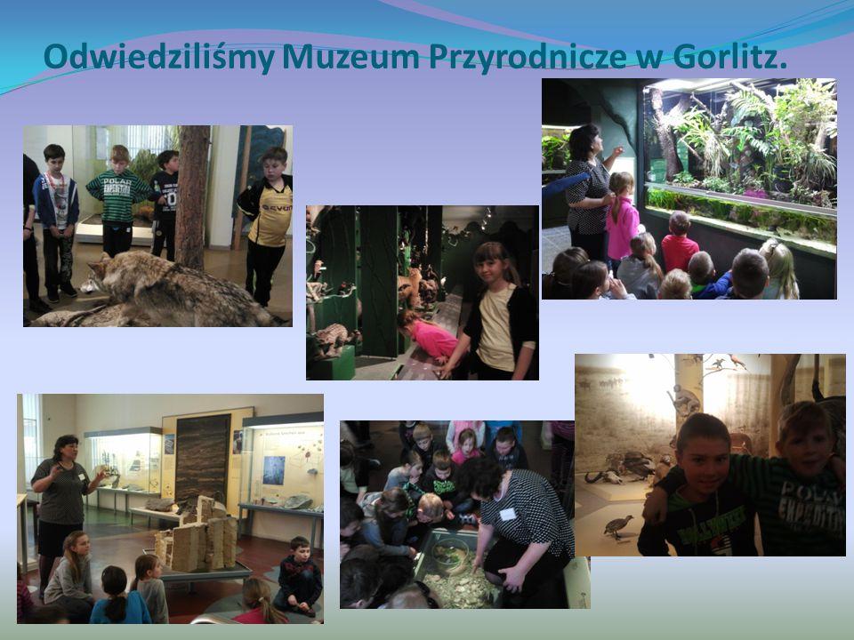 Odwiedziliśmy Muzeum Przyrodnicze w Gorlitz.