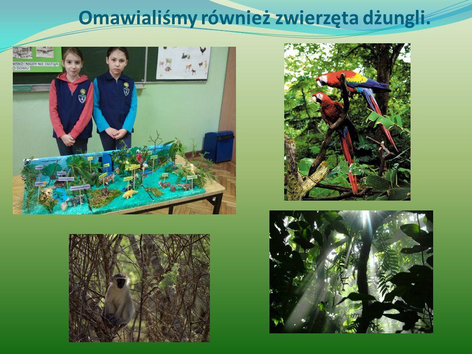 Omawialiśmy również zwierzęta dżungli.
