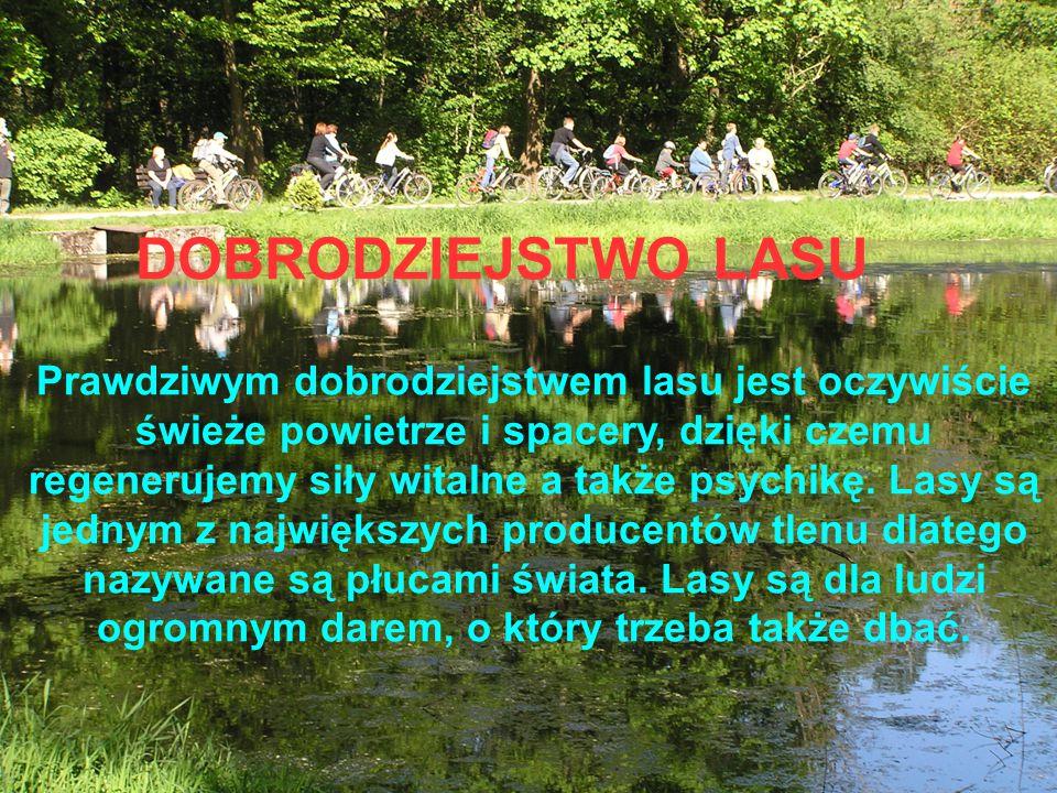 Prawdziwym dobrodziejstwem lasu jest oczywiście świeże powietrze i spacery, dzięki czemu regenerujemy siły witalne a także psychikę.