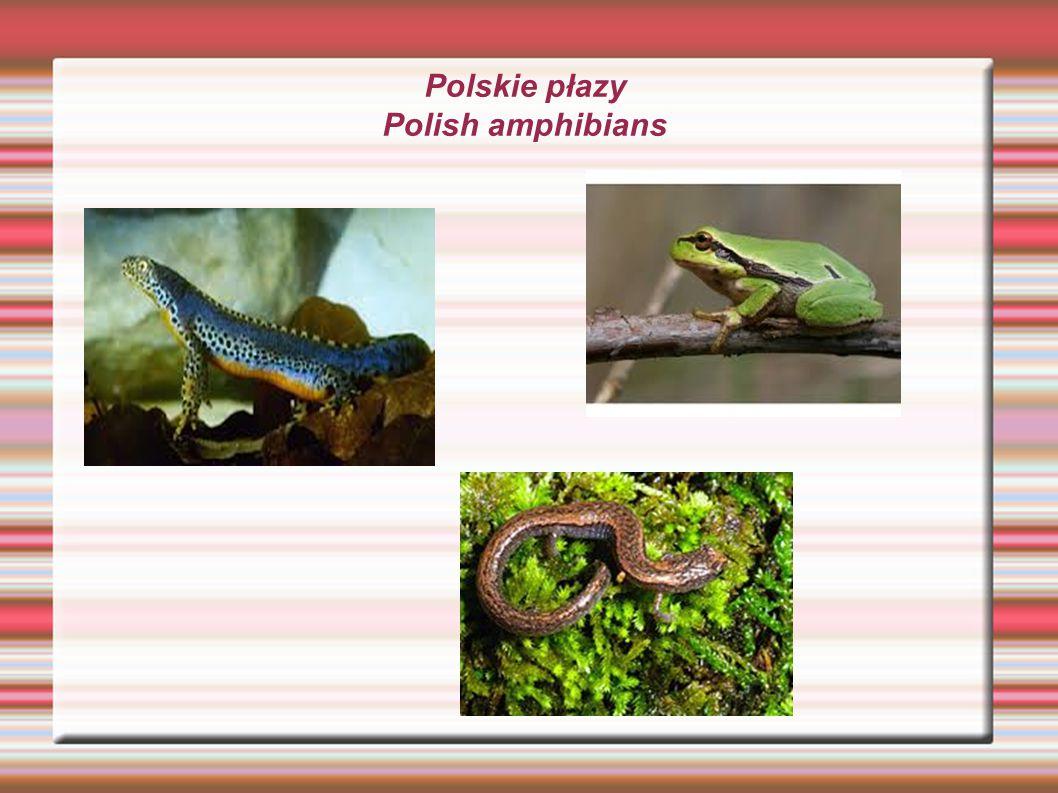 Polskie żaby Polish frogs W Polsce występuje sześć gatunków żab.