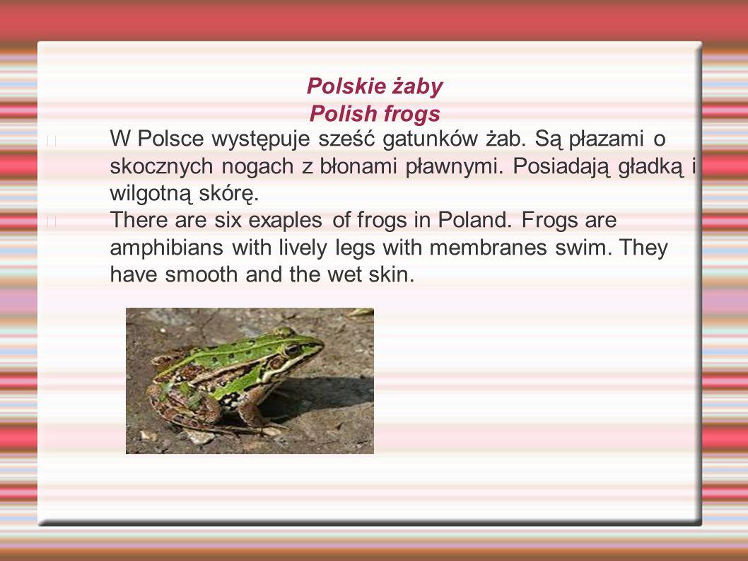 Polskie żaby Polish frogs W Polsce występuje sześć gatunków żab. Są płazami o skocznych nogach z błonami pławnymi. Posiadają gładką i wilgotną skórę.