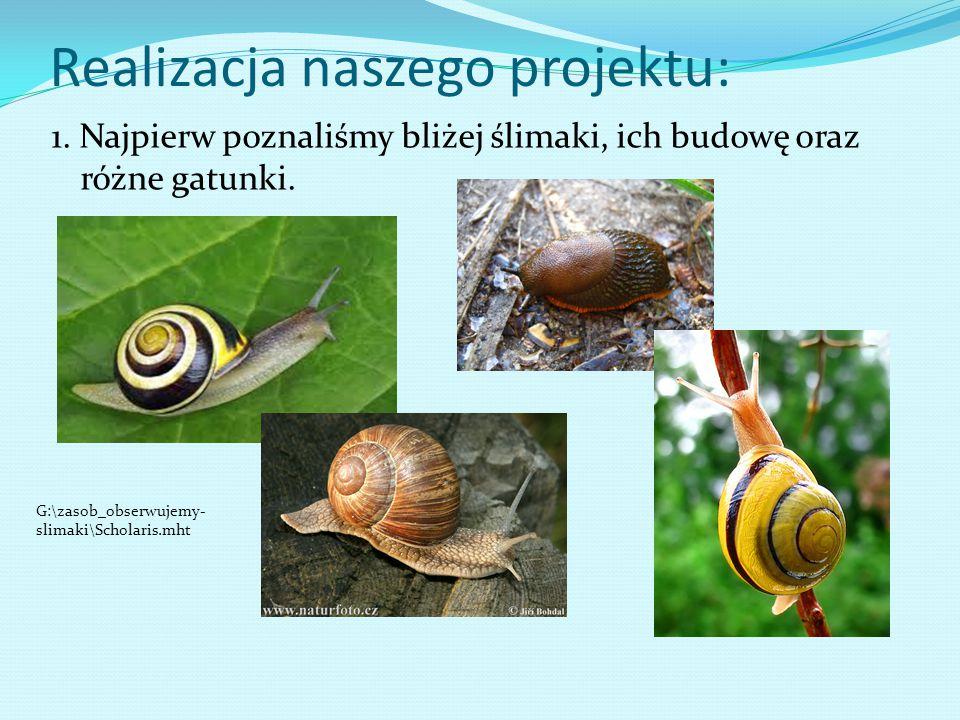 Realizacja naszego projektu: 1. Najpierw poznaliśmy bliżej ślimaki, ich budowę oraz różne gatunki. G:\zasob_obserwujemy- slimaki\Scholaris.mht