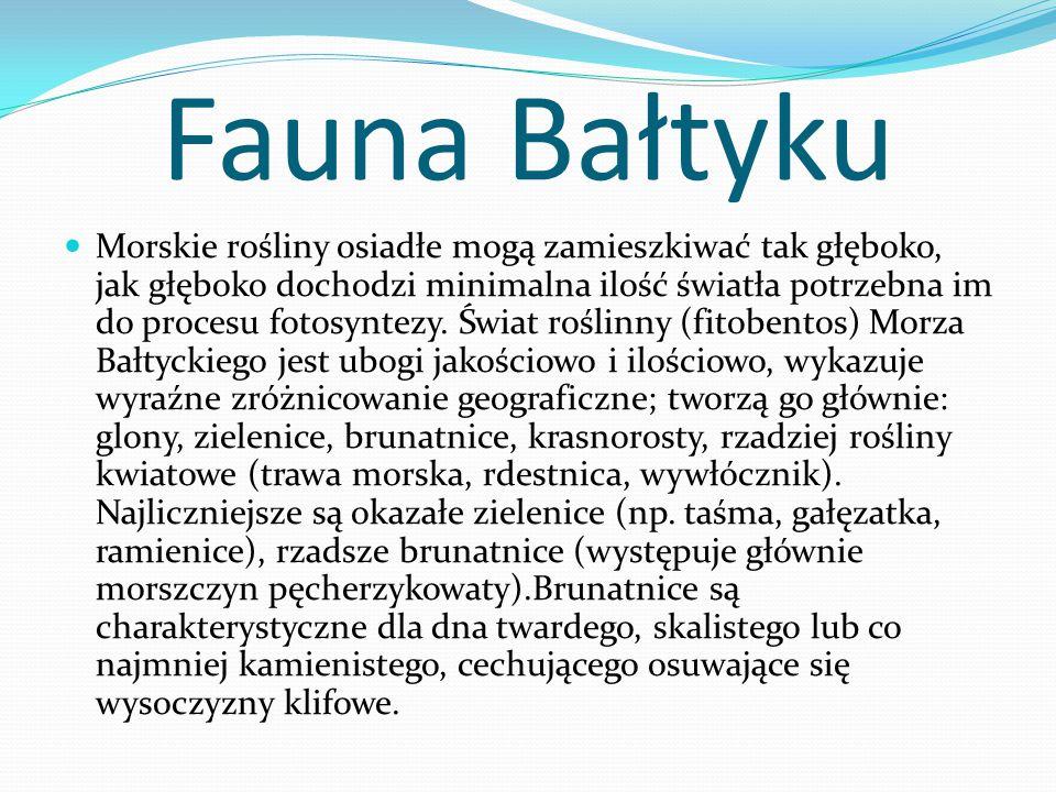 Fauna Bałtyku Morskie rośliny osiadłe mogą zamieszkiwać tak głęboko, jak głęboko dochodzi minimalna ilość światła potrzebna im do procesu fotosyntezy.