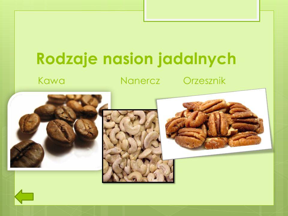Rodzaje nasion jadalnych Kawa Nanercz Orzesznik