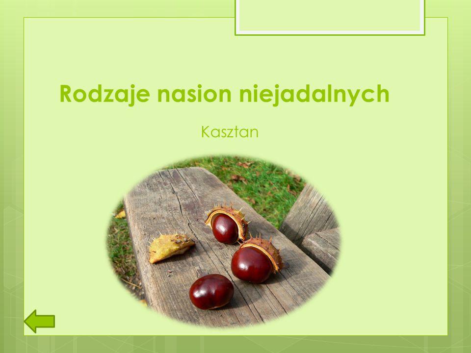 Rodzaje nasion niejadalnych Kasztan