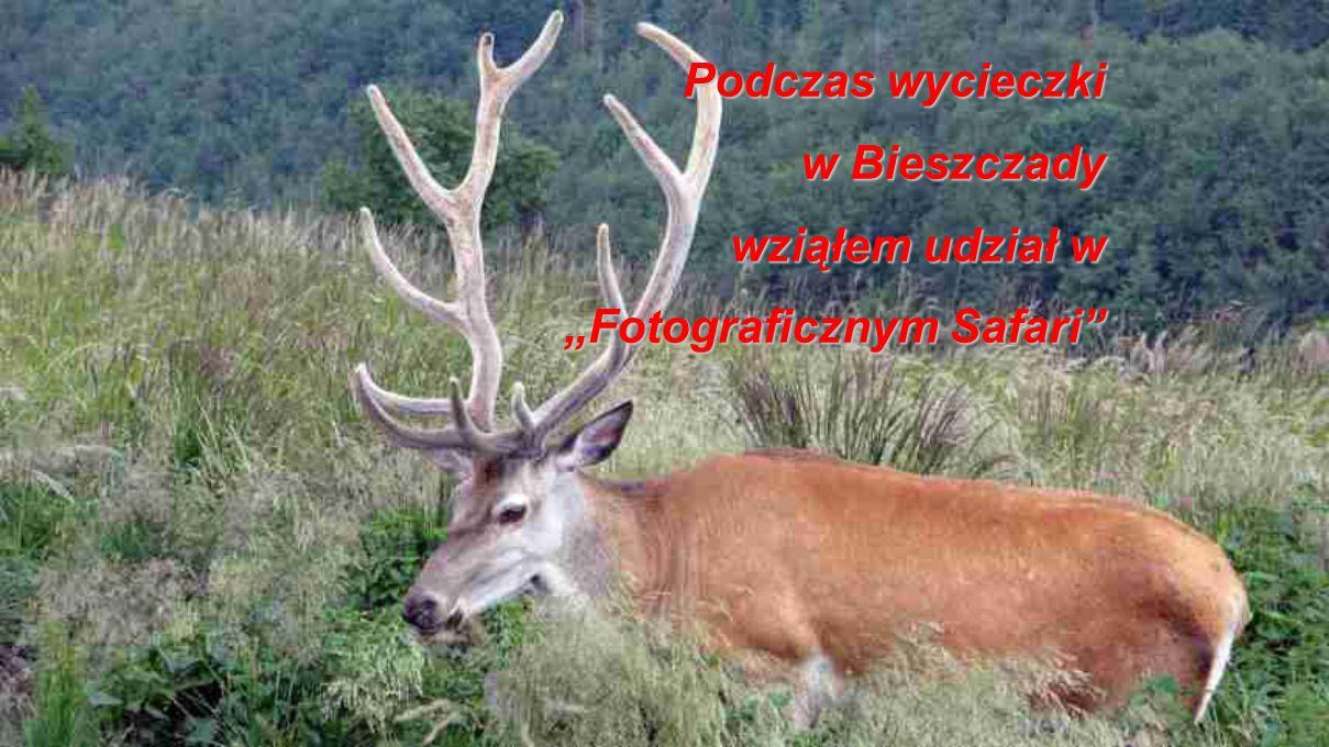 """Podczas wycieczki w Bieszczady wziąłem udział w """"Fotograficznym Safari"""""""