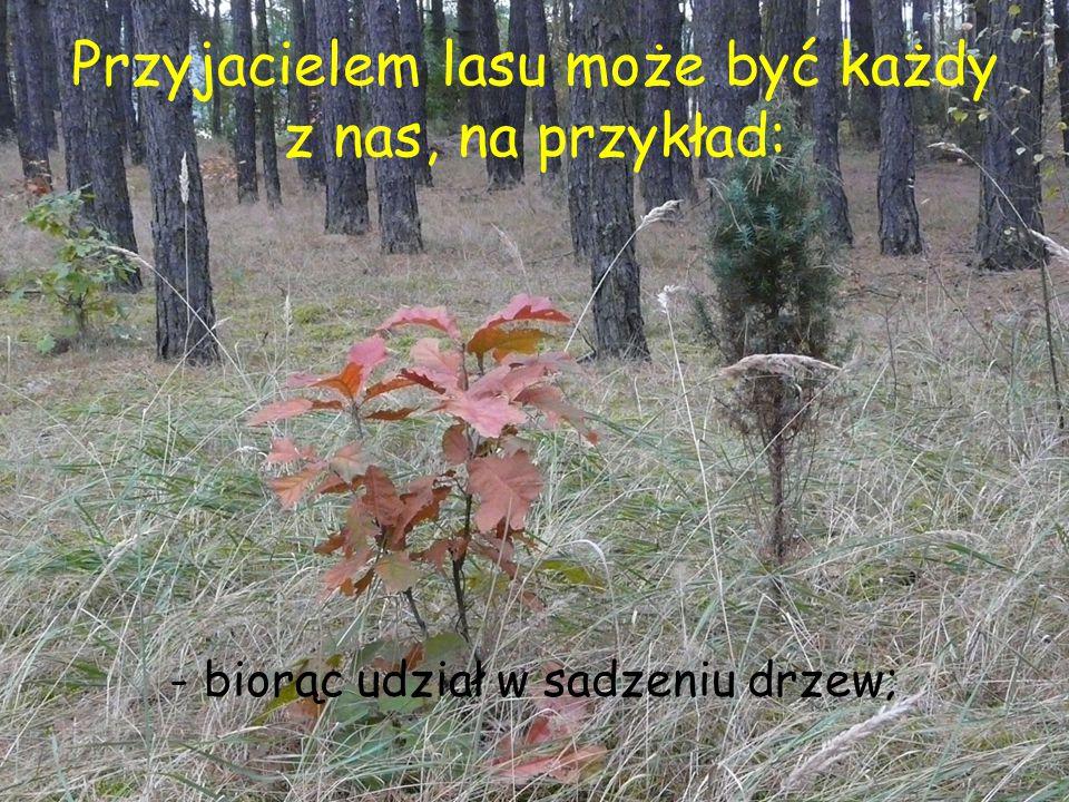Przyjacielem lasu może być każdy z nas, na przykład: - biorąc udział w sadzeniu drzew;