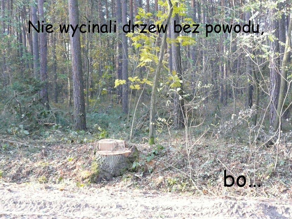 Nie wycinali drzew bez powodu, bo…