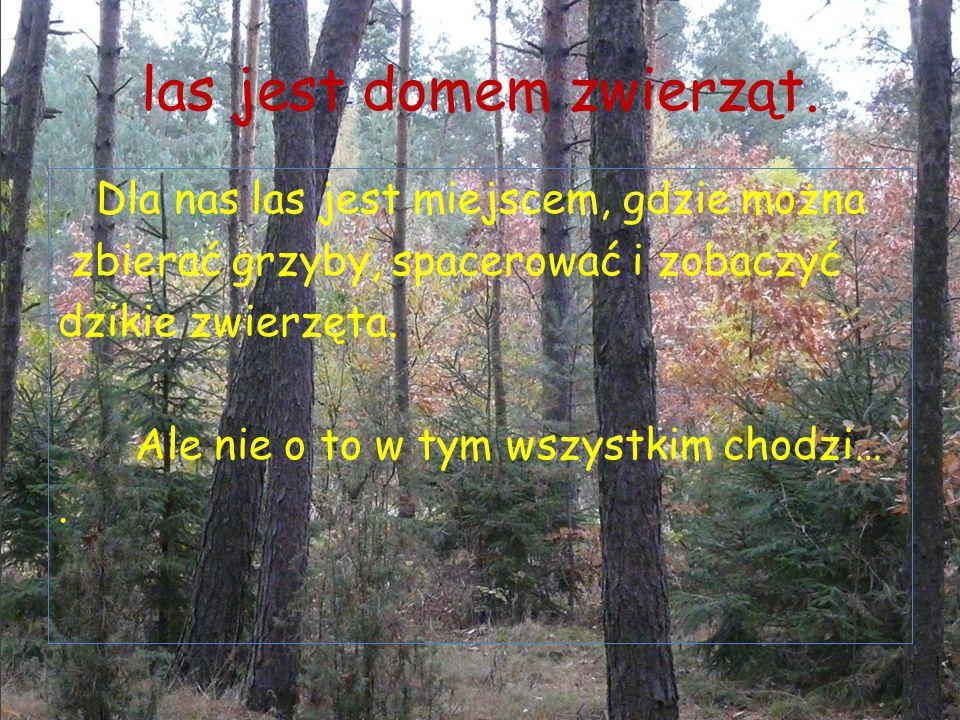 las jest domem zwierząt. Dla nas las jest miejscem, gdzie można zbierać grzyby, spacerować i zobaczyć dzikie zwierzęta. Ale nie o to w tym wszystkim c