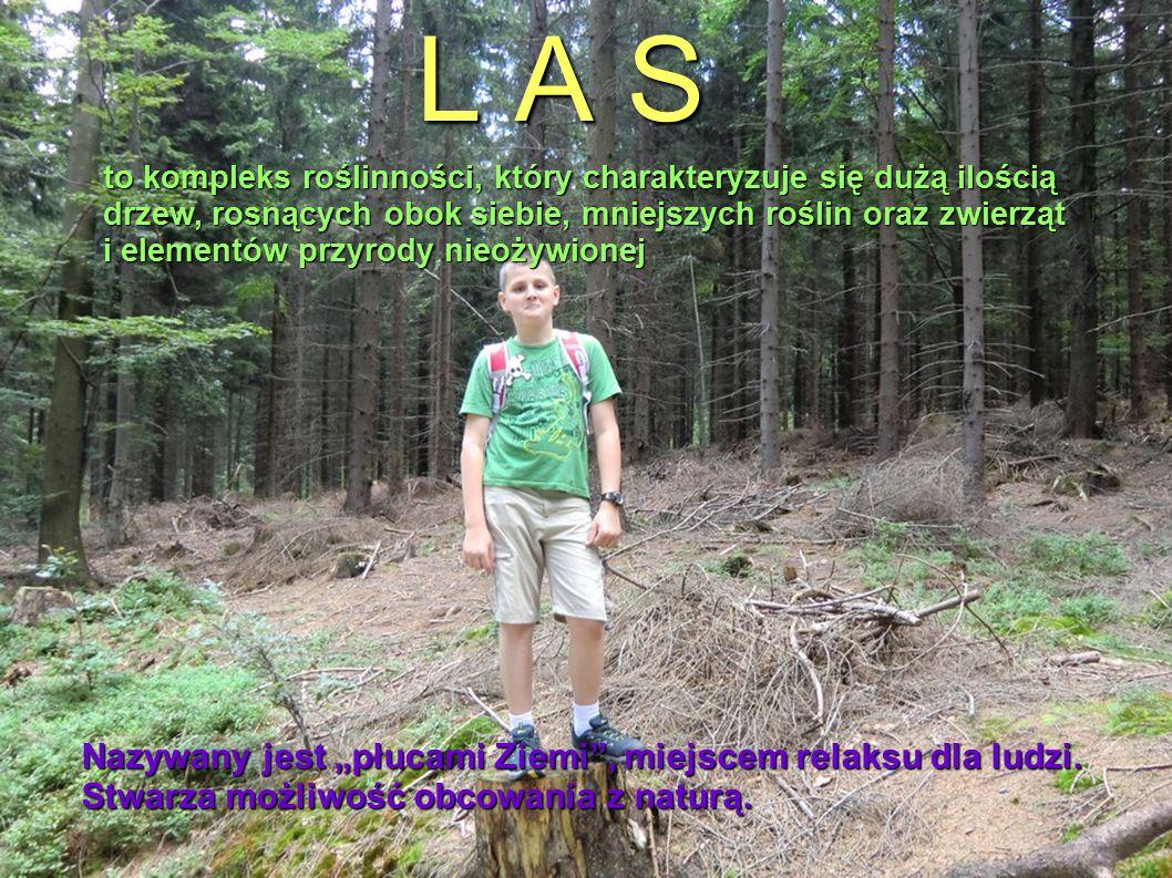 """L A S. Nazywany jest """"płucami Ziemi"""", miejscem relaksu dla ludzi. Stwarza możliwość obcowania z naturą. to kompleks roślinności, który charakteryzuje"""