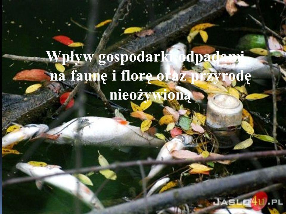 Wpływ gospodarki odpadami na faune Wpływ gospodarki odpadami na faunę i florę oraz przyrodę nieożywioną