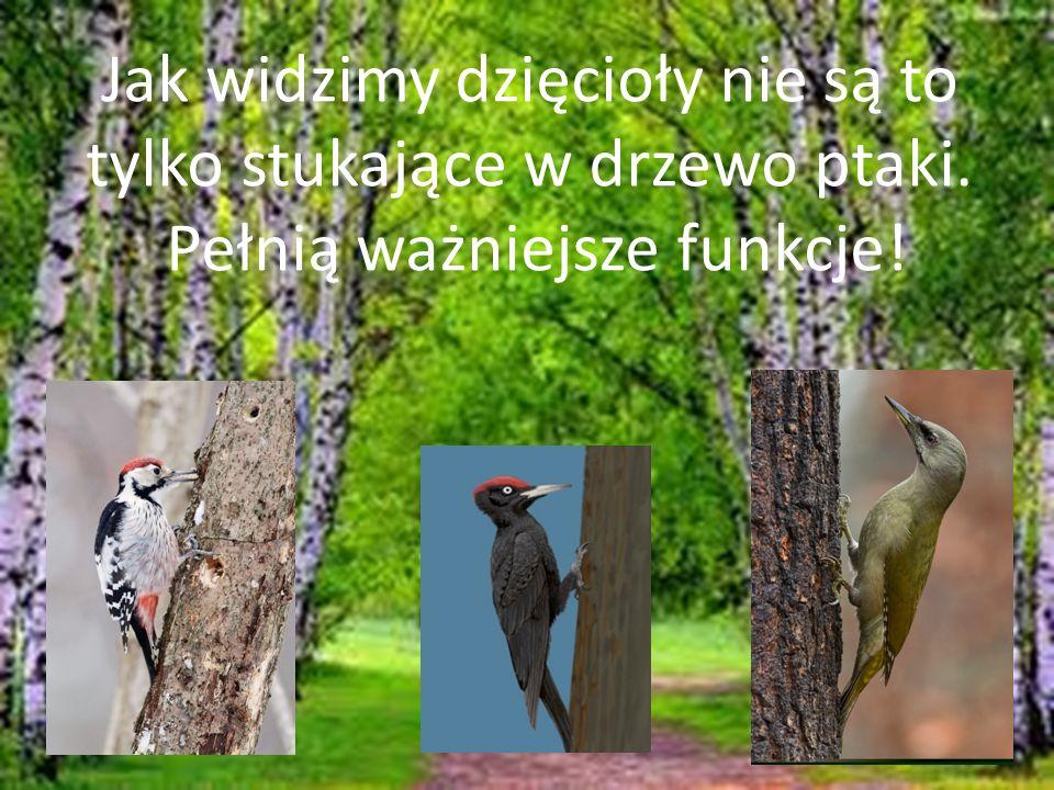 Jak widzimy dzięcioły nie są to tylko stukające w drzewo ptaki. Pełnią ważniejsze funkcje!