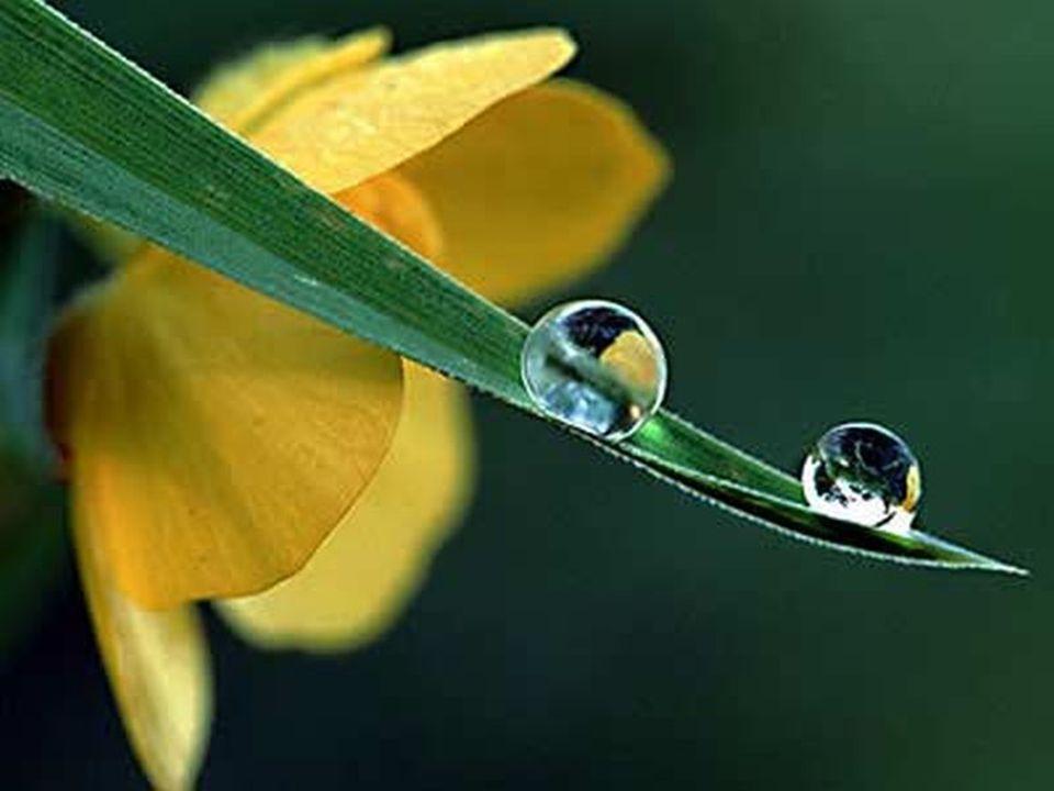 Ile nocy nie przespałaś, Ile w smutku łez wylałaś, Tyle kwiatów dnia każdego Rwij na niwie życia mego, Tyle pociech za Twe znoje, Niech Ci sprawi serce moje!