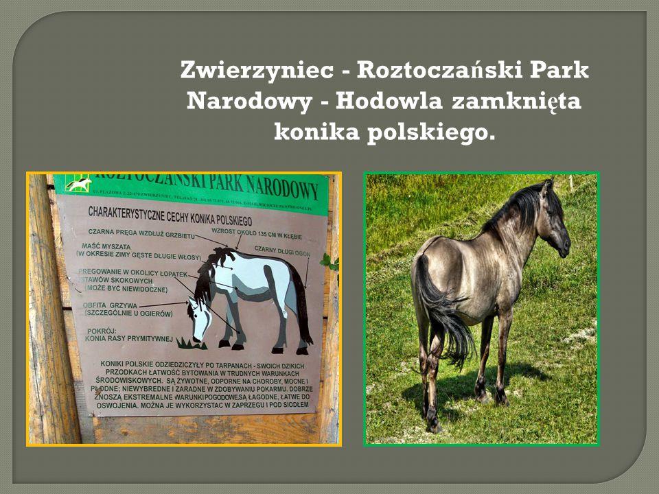 Zwierzyniec - Roztocza ń ski Park Narodowy - Hodowla zamkni ę ta konika polskiego.