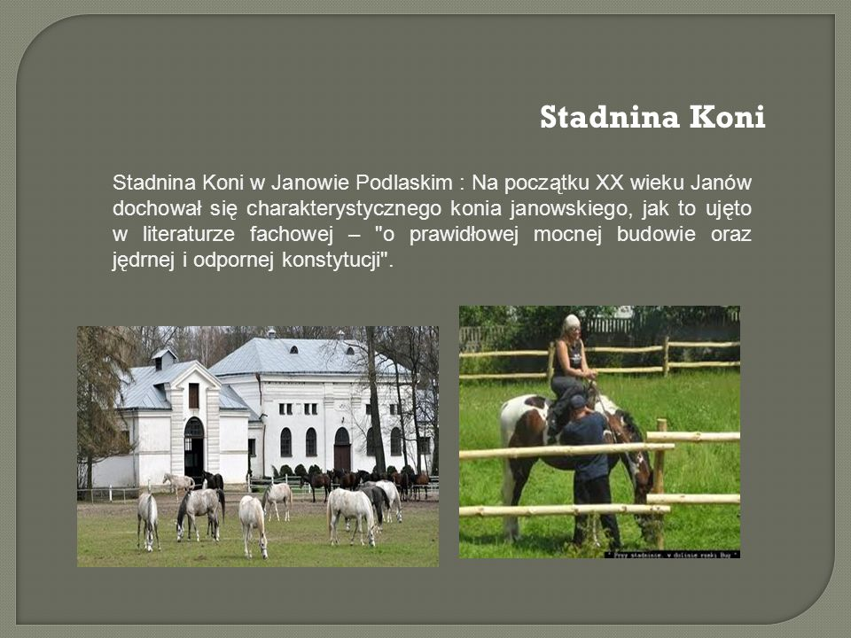 Stadnina Koni Stadnina Koni w Janowie Podlaskim : Na początku XX wieku Janów dochował się charakterystycznego konia janowskiego, jak to ujęto w literaturze fachowej – o prawidłowej mocnej budowie oraz jędrnej i odpornej konstytucji .