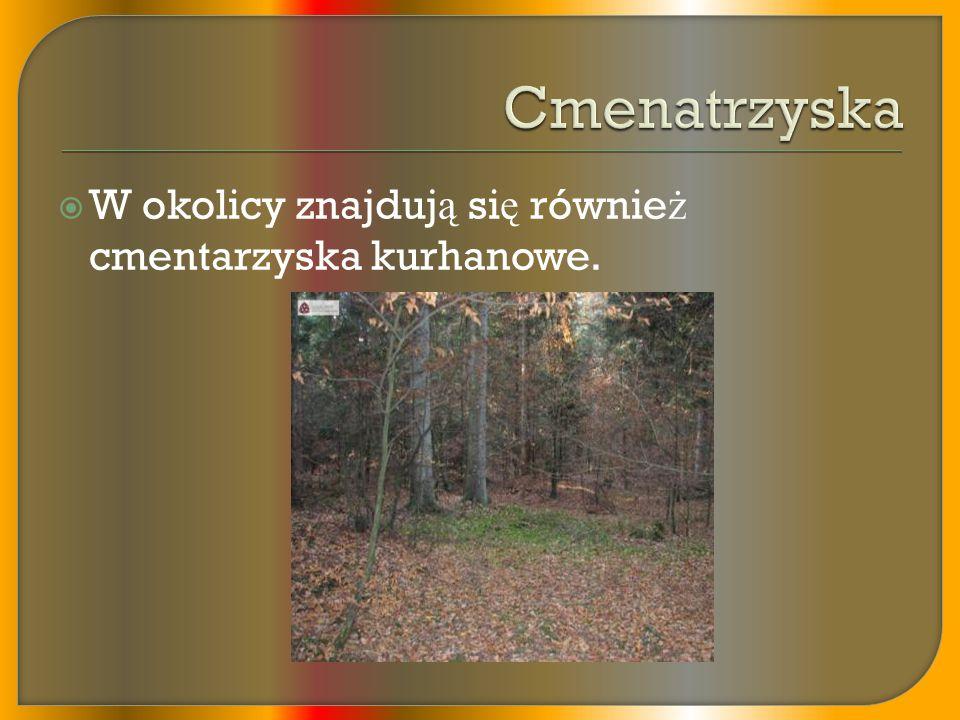  Jesieni ą 2005 dr Gerard Gierli ń ski odkry ł we wsi Potok skamienia ł e ś lady dinozaura kaczodziobego oraz mi ę so ż ernego.