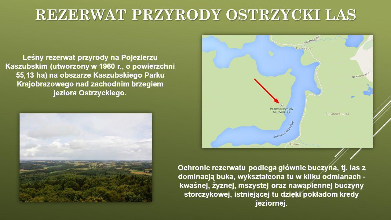 REZERWAT PRZYRODY OSTRZYCKI LAS Ochronie rezerwatu podlega głównie buczyna, tj. las z dominacją buka, wykształcona tu w kilku odmianach - kwaśnej, żyz