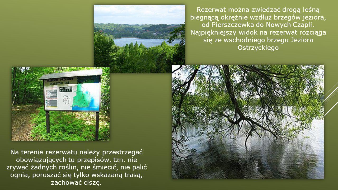 Na terenie rezerwatu należy przestrzegać obowiązujących tu przepisów, tzn. nie zrywać żadnych roślin, nie śmiecić, nie palić ognia, poruszać się tylko
