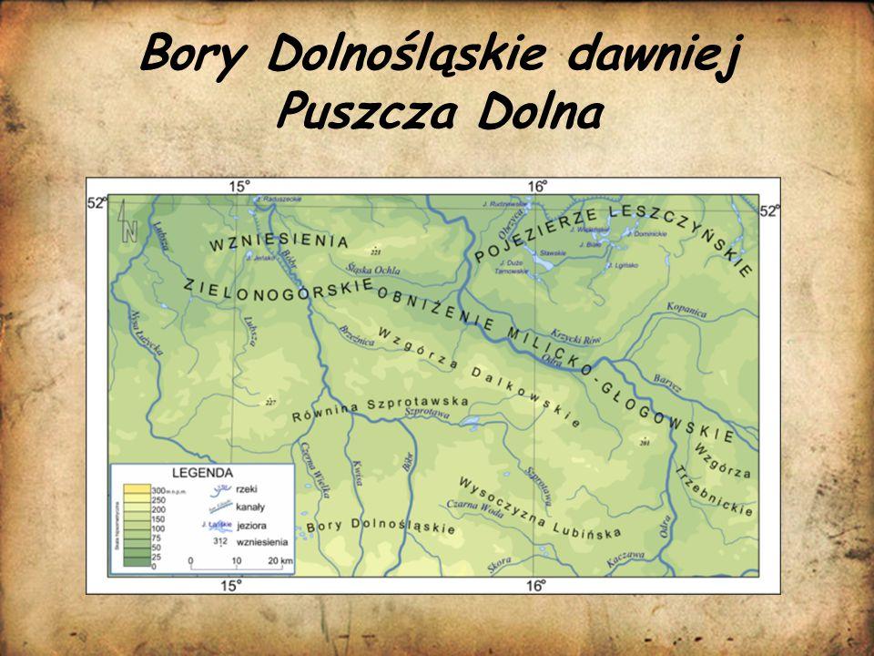 Bory Dolnośląskie dawniej Puszcza Dolna