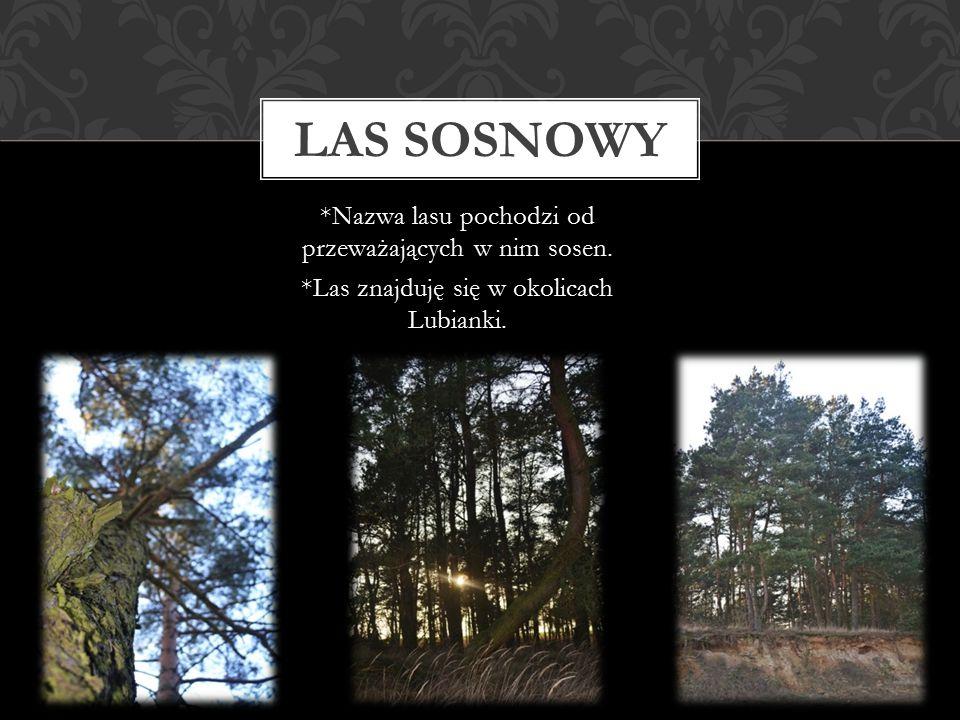 *Nazwa lasu pochodzi od przeważających w nim sosen. *Las znajduję się w okolicach Lubianki. LAS SOSNOWY