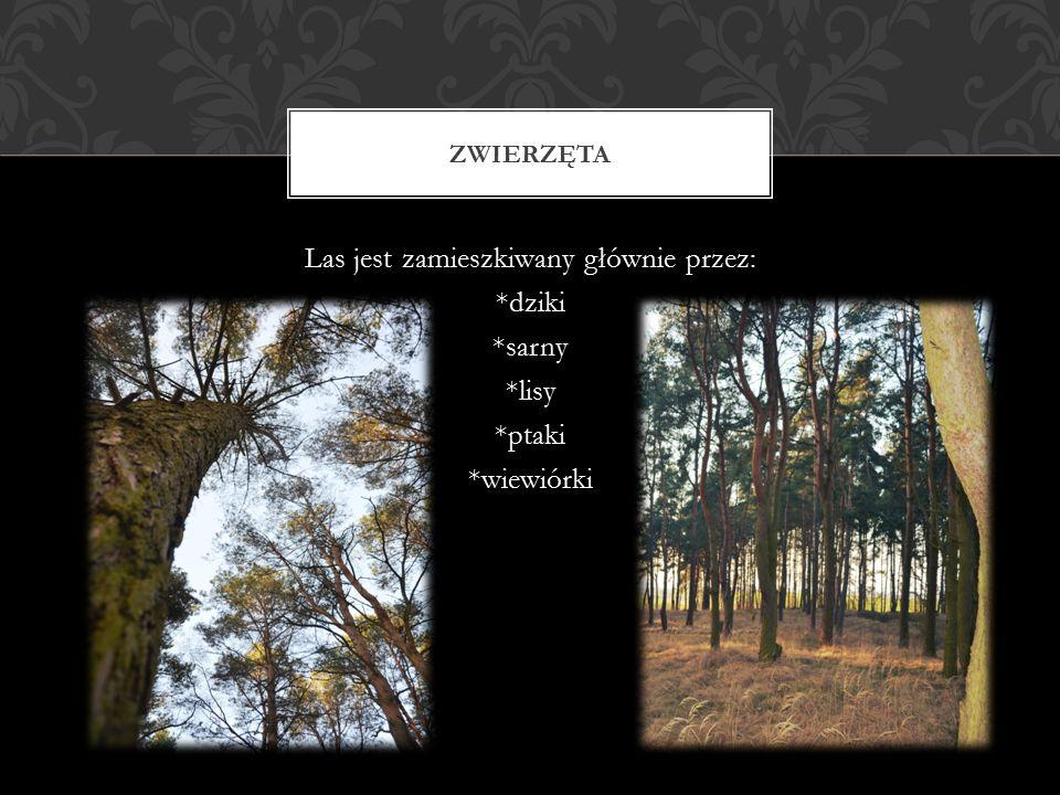 Las jest zamieszkiwany głównie przez: *dziki *sarny *lisy *ptaki *wiewiórki ZWIERZĘTA