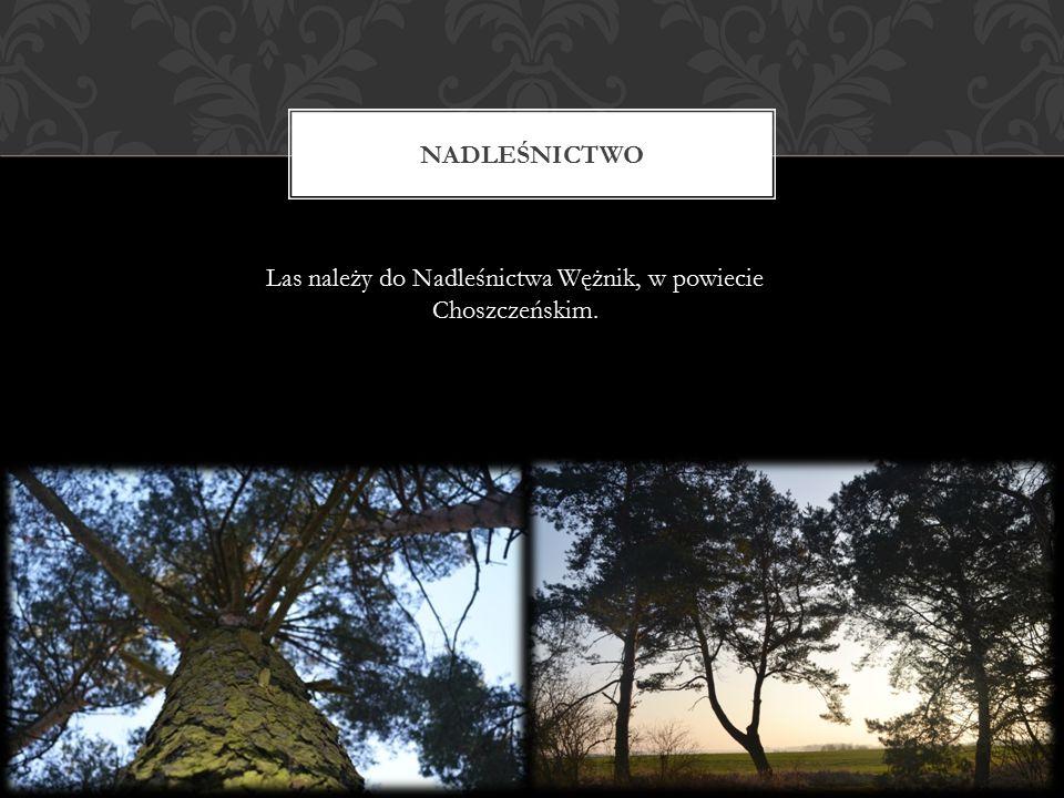 NADLEŚNICTWO Las należy do Nadleśnictwa Wężnik, w powiecie Choszczeńskim.