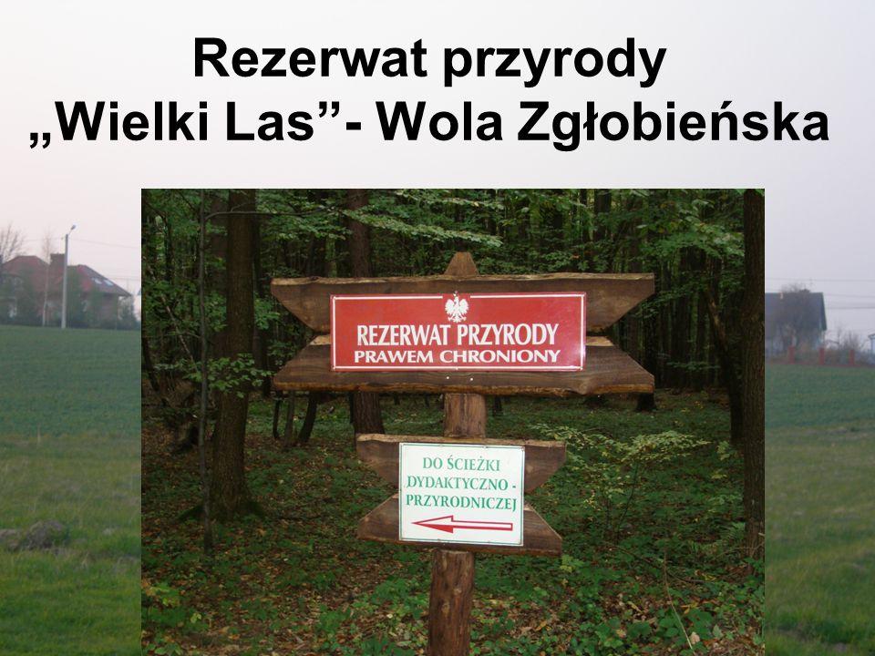 """Leśna ścieżka dydaktyczna w rezerwacie przyrody Wielki Las Ścieżka w całości przebiega przez rezerwat przyrody """"Wielki Las ."""