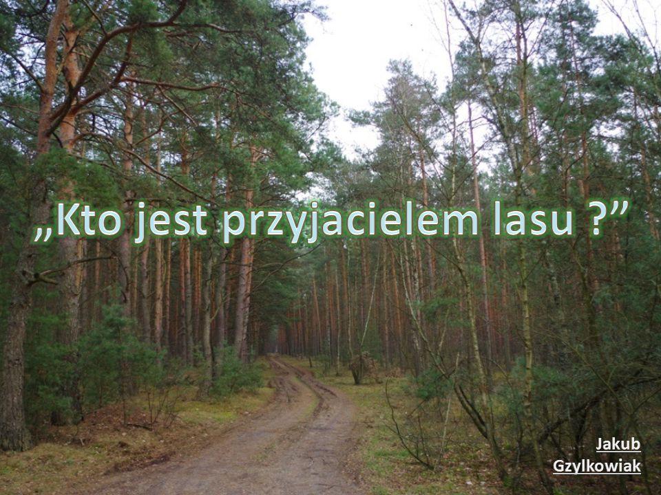 Wielu z nas nie potrafi uszanować piękna naszego lasu, naszej przyrody.