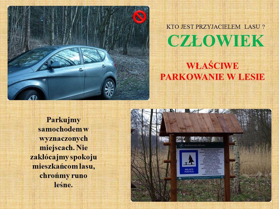Parkujmy samochodem w wyznaczonych miejscach. Nie zakłócajmy spokoju mieszkańcom lasu, chrońmy runo leśne. WŁAŚCIWE PARKOWANIE W LESIE KTO JEST PRZYJA