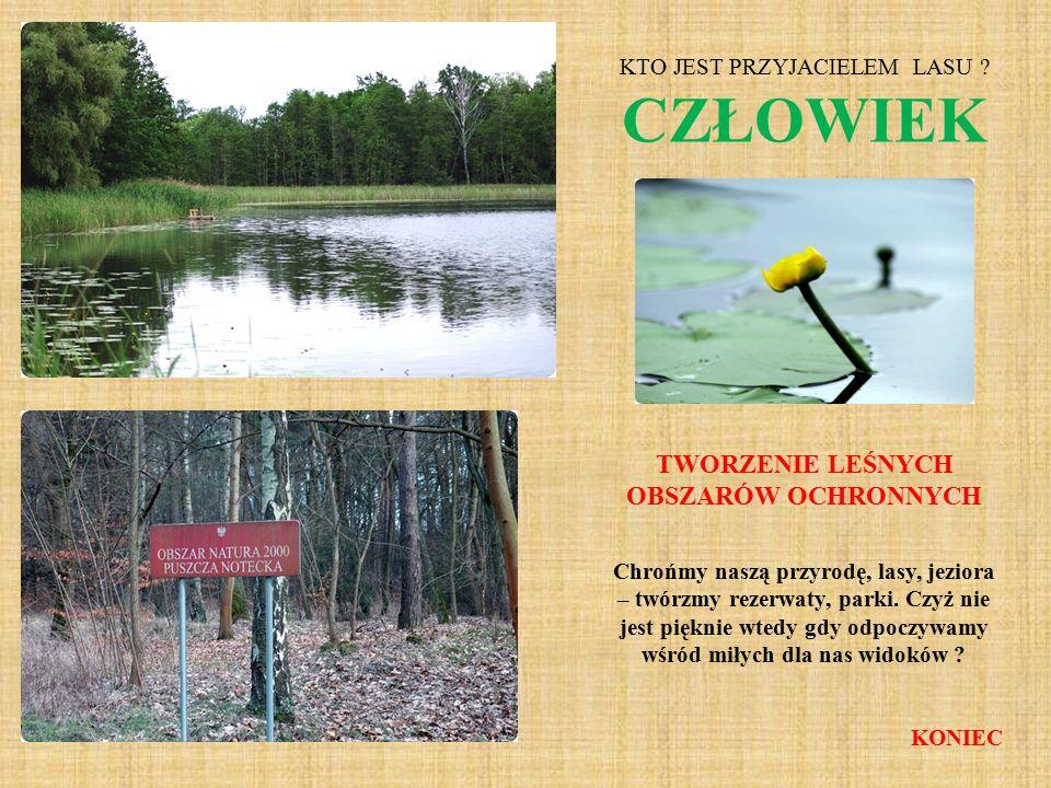 Chrońmy naszą przyrodę, lasy, jeziora – twórzmy rezerwaty, parki. Czyż nie jest pięknie wtedy gdy odpoczywamy wśród miłych dla nas widoków ? KONIEC KT