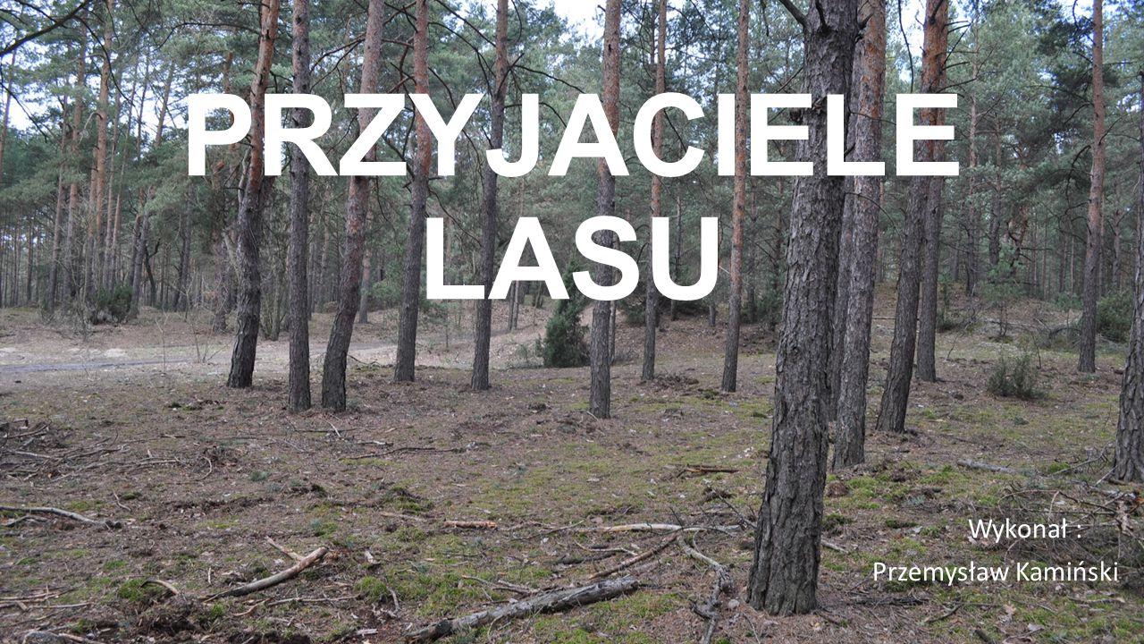 PRZYJACIELE LASU Wykonał : Przemysław Kamiński
