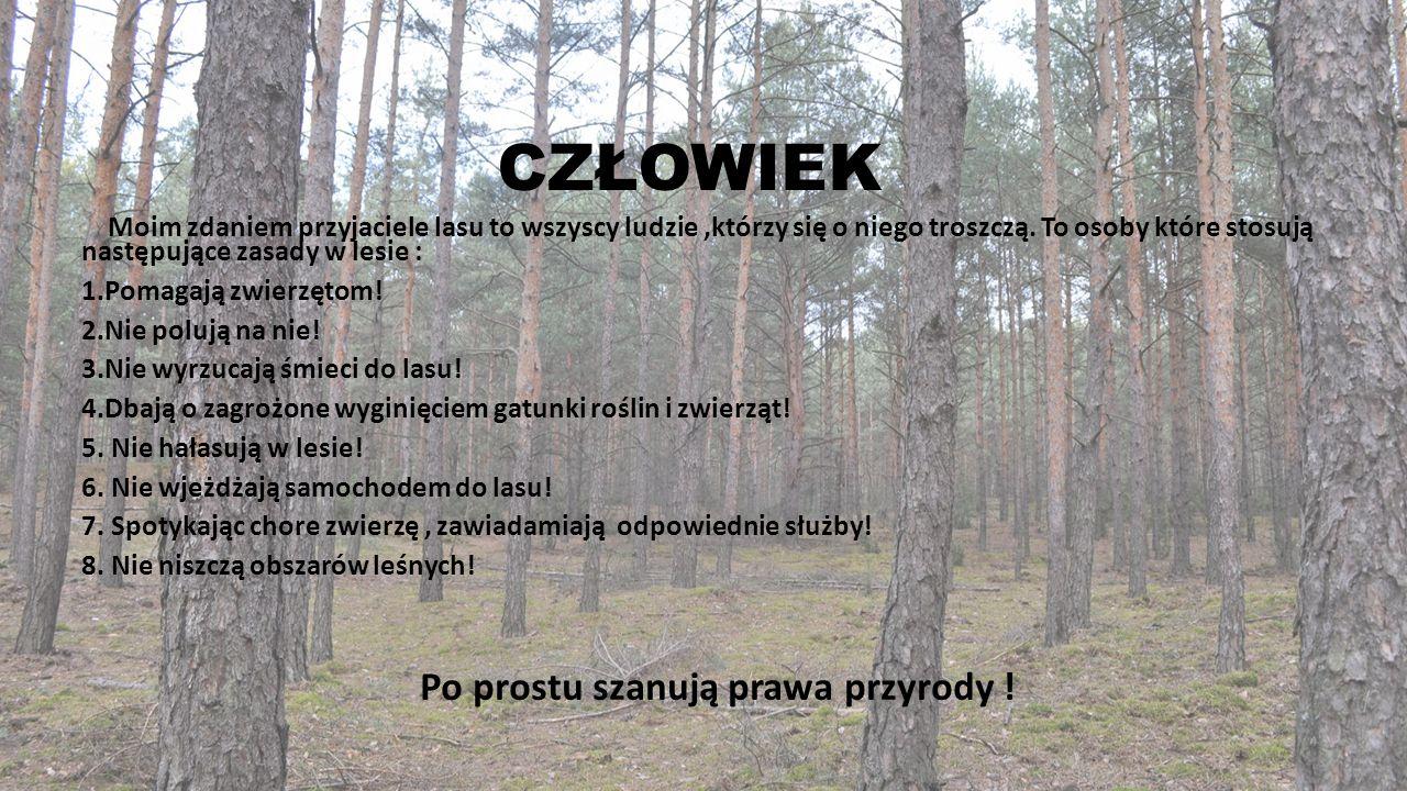 CZŁOWIEK Moim zdaniem przyjaciele lasu to wszyscy ludzie,którzy się o niego troszczą. To osoby które stosują następujące zasady w lesie : 1.Pomagają z