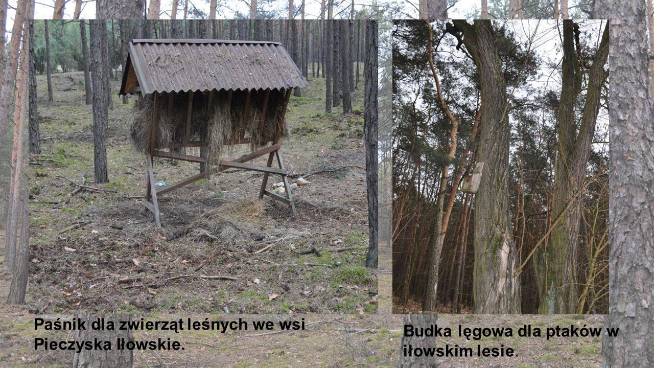 Paśnik dla zwierząt leśnych we wsi Pieczyska Iłowskie. Budka lęgowa dla ptaków w iłowskim lesie.