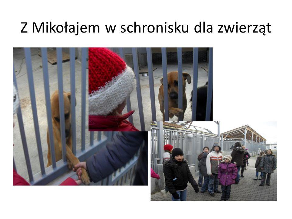 Z Mikołajem w schronisku dla zwierząt