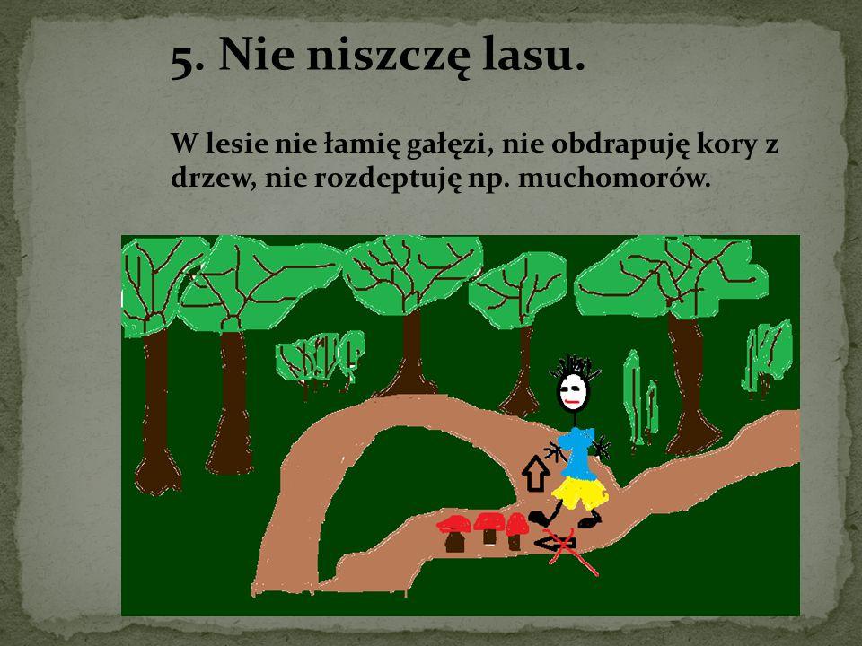 5. Nie niszczę lasu. W lesie nie łamię gałęzi, nie obdrapuję kory z drzew, nie rozdeptuję np. muchomorów.
