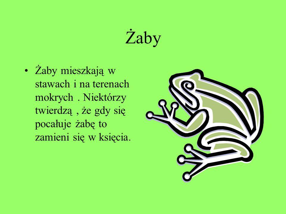 Żaby Żaby mieszkają w stawach i na terenach mokrych.