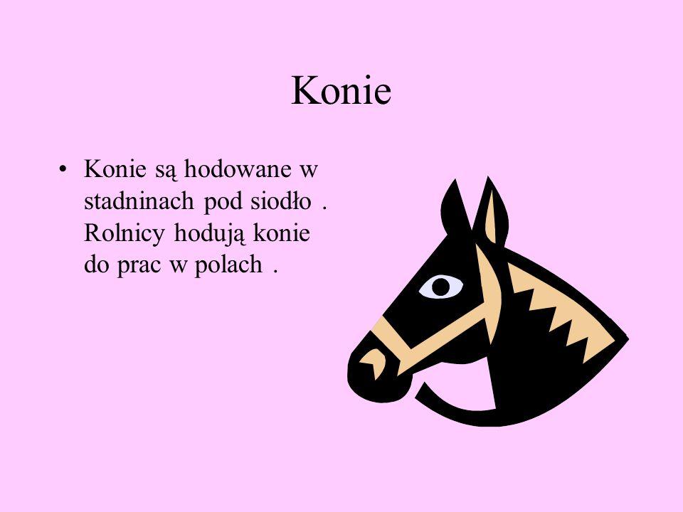 Konie Konie są hodowane w stadninach pod siodło. Rolnicy hodują konie do prac w polach.