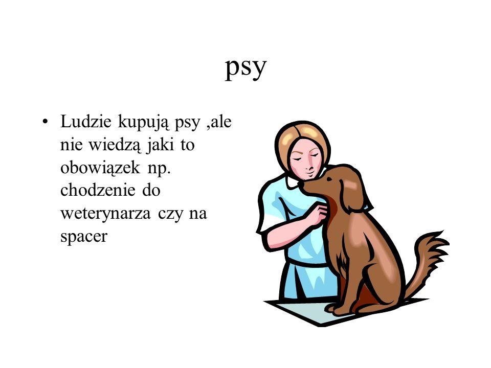 psy Ludzie kupują psy,ale nie wiedzą jaki to obowiązek np. chodzenie do weterynarza czy na spacer