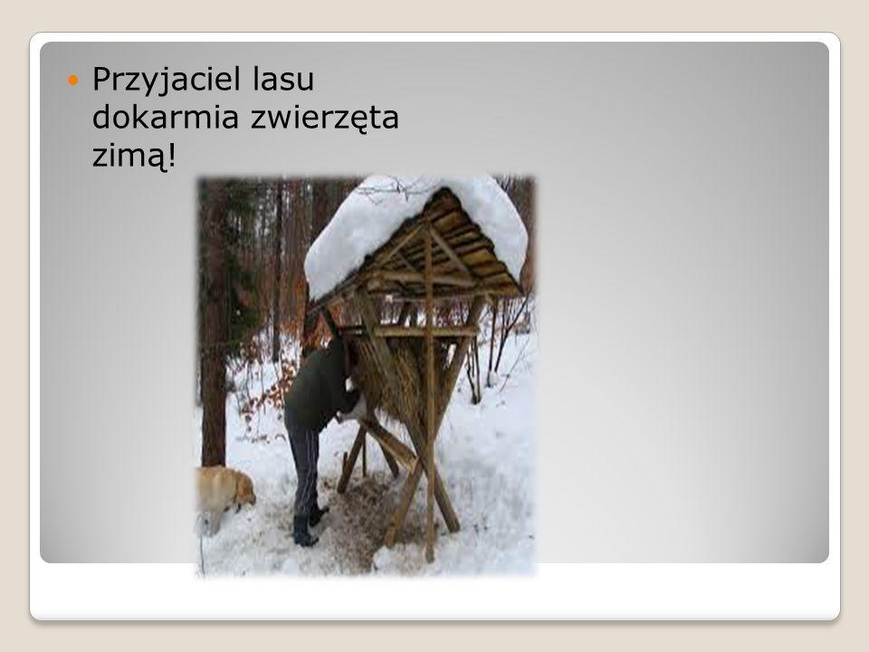 Przyjaciel lasu dokarmia zwierzęta zimą!