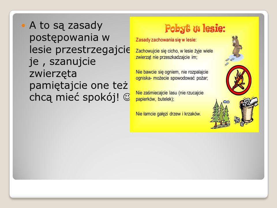A to są zasady postępowania w lesie przestrzegajcie je, szanujcie zwierzęta pamiętajcie one też chcą mieć spokój!