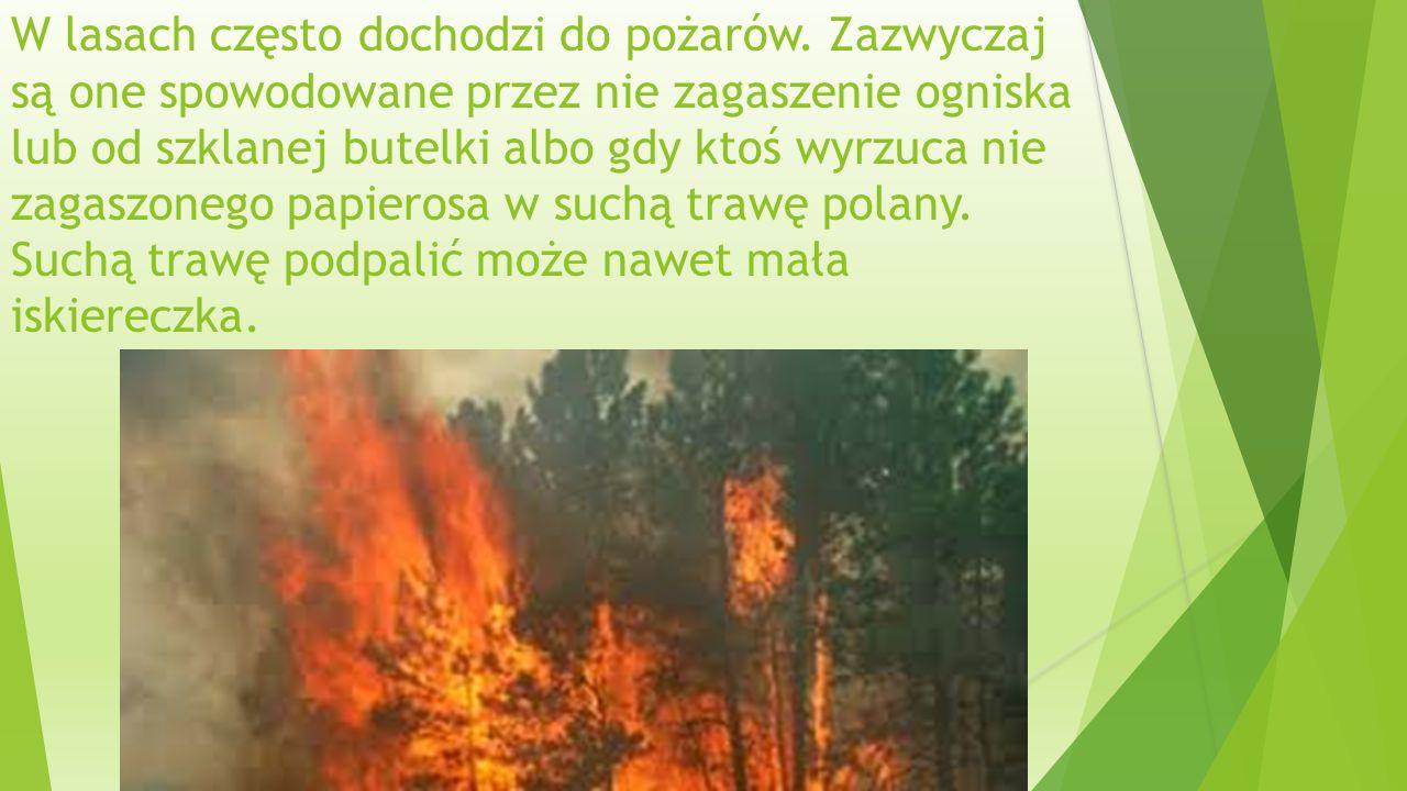 W lasach często dochodzi do pożarów.