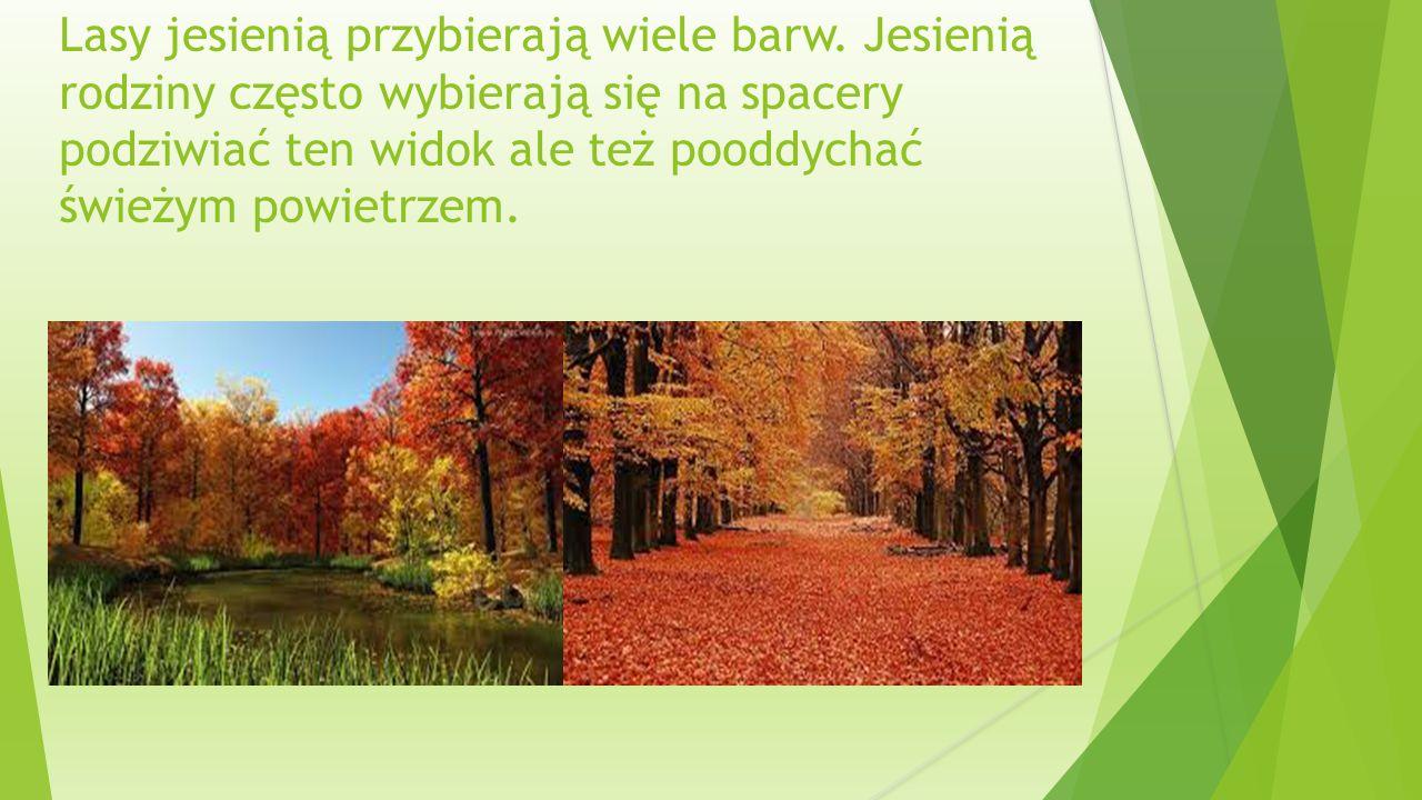 Lasy jesienią przybierają wiele barw.