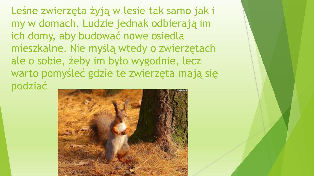 Leśne zwierzęta żyją w lesie tak samo jak i my w domach.
